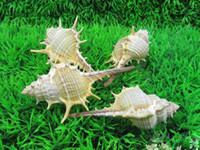 Wholesale Aquarium Seashells natural cm screw fish tank home decoration shell coral T9346