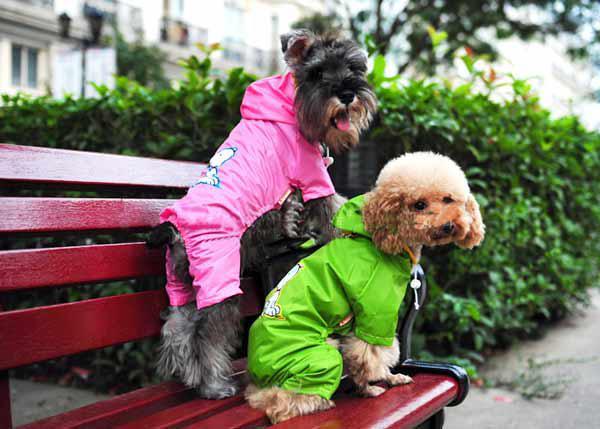Dog Fashion : Dog Clothes : Dog Accessories | Canine Co