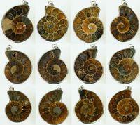 achat en gros de pendentif madagascar-Millions d'Années, Madagascar Ammonite Conque d'Escargot de Mer Buccin Fossiles Ouvert Mixte Plaqué Argent /Naturel conque Pendentif pendentif 20pcs