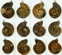 al por mayor colgante de madagascar-Millones de años Madagascar amonita concha del caracol de mar Whelk Fossil Abierto mixtos plateado plata / concha natural 20pcs colgante colgante
