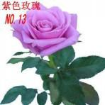 Wholesale 60 seeds Colors Rose Seeds Rainbow Rose Seeds OWNER JUST WANTED TO WIN GOOD REPUTATION MULTI COLOR RAINBOW ROSE