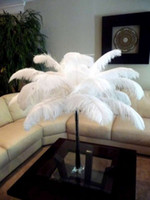 Wholesale INCH cm Ostrich Feather Plume for Table Decoration wedding centerpieces