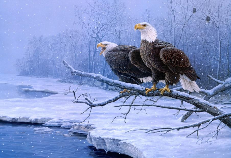 Bald eagle on the ice HD desktop wallpaper : Widescreen : High ...