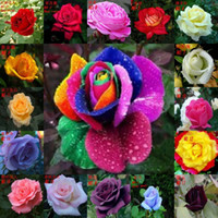 rainbow rose seeds - 300pieces Colors Rose Seeds Rainbow Rose Seeds OWNER JUST WANTED TO WIN GOOD REPUTATION MULTI COLOR RAINBOW ROSE