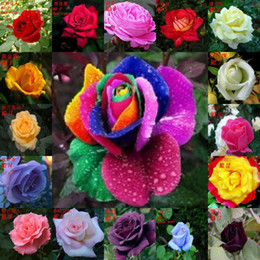 Wholesale 300pieces Colors Rose Seeds Rainbow Rose Seeds OWNER JUST WANTED TO WIN GOOD REPUTATION MULTI COLOR RAINBOW ROSE
