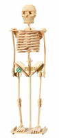 Wholesale Human Skeleton D Jigsaw Woodcraft Kit Wooden Puzzle Desktop Decoration Kids Educational Toys