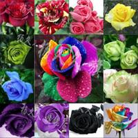 Wholesale New Arrival Beautiful Flower Rainbow rose seed Rose Seeds