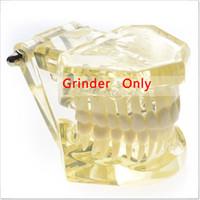 Cheap Dental lab Dentist orthodontic endodontics tool Teaching Orthodontic model with inside metal bracket Yellow color