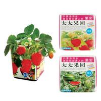 Cheap Strawberry watermelon bonsai four seasons mini plant bonsai af00989 0.19