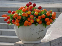 Wholesale HOT cm15 quot Artificial Plants Simulation Red Berries Orange Apple Strawberries Bush Twelve Fruits Per Bush Home Decoration