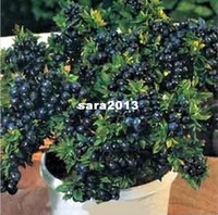 other Indoor Plants Herbs BLUEBERRY BONSAI TREE * 15 SEEDS WITH HERMETIC PACKING * INDOOR OUTDOOR AVAILABLE * HEIRLOOM FRUIT SEEDS