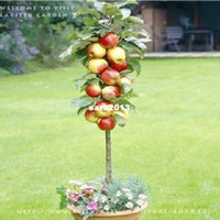 apple crisps - 30 SEEDS RED APPLE TREE VERY FRAGRANT SWEET CRISP GARDENING SEEDS PLUS MYSTERIOUS GIFT
