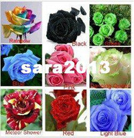 best rose plants - 9 Colors Beautiful Flowers the Best Choice for Home Gardening Rose Seeds Teach You How to Plant Rose Seeds by Email