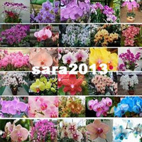Wholesale Packs Butterfly Orchid Flower Seeds Phalaenopsis amabilis mix colors