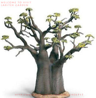baobab tree - 2 SEEDS ADANSONIA DIGITATA SEEDS BONSAI TREE AFRICAN BAOBAB INDIGENOUS TREE SEEDS PLUS MYSTERIOUS GIFT