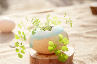 Wholesale Meaty plant egg flower pot in the office furnishing articles daily life ceramic crafts and gifts fm082
