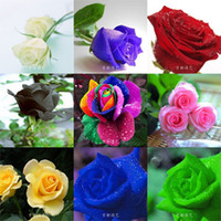 Wholesale Garden Rose Flower Seeds COLORS SEEDS ROSE SEEDS