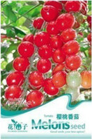 big red tomatoes - tomato seeds Cherry seeds small tomato yellow purple red big peach Chocolate