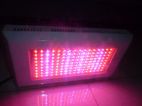 Wholesale 144 w w Worldwide Led grow light for plant growing and flower marijuana led grow light manufacturer