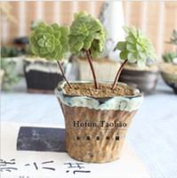 Wholesale Flower Pots Planters Japanese Style Ceramic Vintage Meat Flower Pot Coarse Pottery Flower Pot Upside Down Plant Pot