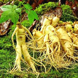 Wholesale 40 Seeds Chinese hardy Panax Ginseng Korea Ginseng Seeds seeds Rare medicinal herbs seeds