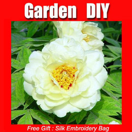 Wholesale China s White Peony flower HOT PEONY