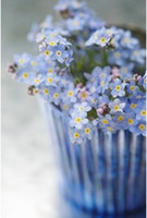 Wholesale Dwarf balcony flowerpot flowers and seeds La ill with forget me forget grass