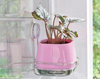 Wholesale Vacuum Suction Cups Square Flower Pot Strong Sucker Green Pink Cups Flower product