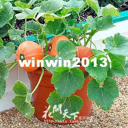 Wholesale Bonsai Pumpkin Seeds Family Balcony vegetable Plants Seeds bags