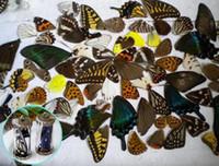 Wholesale 20pcs real butterfly wings D Butterfly specimens wings Real Dried Moth butterflies wings for ring earrings necklace framed butterflies