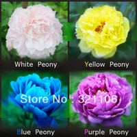 Wholesale Peony Seed Color Black Red Yellow Pink Green Blue Purple White Pack Each Pack Seeds Total Peony Foloer Seeds