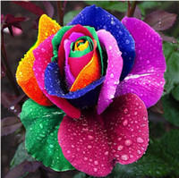 Wholesale Pink Black White Red Purple Green Blue Rose Seeds
