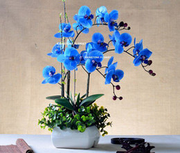 Wholesale Christmas CM PU Real Touch Artificial Flower Phalaenopsis Orchid Cymbidium in Wedding Home Office Furniture Decor Color FL043