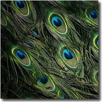 Wholesale Freel shipping Natural Peacock Feathers Eyes about cm inch