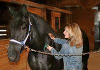 Wholesale FURMINAT EQUINE DESHEDDING TOOL BRUSH RAKE HORSE