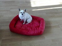 Wholesale Hot Sale Colorful dog bed pet product great gift for dog cat rabbit S M L