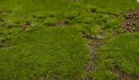 Wholesale 30c cm artificial moss mat grass mat boxwood mat LLY358
