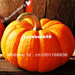Wholesale 50 Seeds Pumpkin quot Spooky Mix quot Varieties of Pumpkin Seeds By Seed Needs