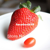 Wholesale RARE GIANT STRAWBERRY seeds FRAGARIA ANANASSA L SWEETEST E Z GROW A