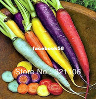 Wholesale RAINBOW CARROT MIX Seven crazy varieties Vegetable seeds seeds