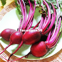 Wholesale Seed Savers Exchange Open Pollinated Beet Seeds Chioggia Seeds Packet
