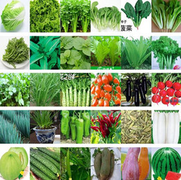 Wholesale 500 seeds and retail kinds of different vegetable seed family potted balcony garden four seasons planting