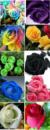 This Ooder Include 10 Packs Each Color 40 Seeds Chinese Rose Seeds - Rainbow Pink Black White Red Purple Green Blue Rose Seeds