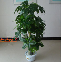 Disposable   Wholesale - Artificial tree large vines plant double-pole pachira French bonsai lucky tree