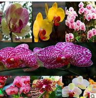 Wholesale 10pcs pack KIND Diffenent Butterfly orchid Bonsai flowers orchid seed POT FLOWER PLANT GARDEN DIY HOME
