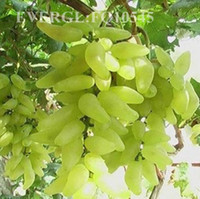 Wholesale green grapes gold finger grapes black grapes green grapes fruit seeds
