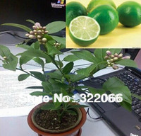Grow Bags Bonsai Indoor Plants Free Shipping 10pcs Lot Bonsai Lemon Tree Seeds High survival Rate Fruit Tree Seeds For Home Gatden Backyard