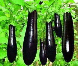 1 Pack 60 Seeds Purple Eggplant Seed Vegetable Seed Green Food Hot