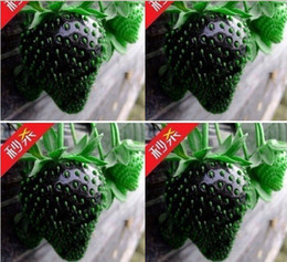 100 SEEDS HERMETIC PACKAGE BLACK STRAWBERRY SEEDS * FRESH FRUIT SEEDS * NON-GMO VEGETABLE A+