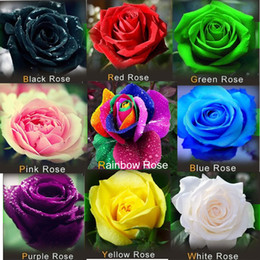 Wholesale YY Farm Easy grow flowers colors Rose Seed Rainbow Pink Black White Red Purple Green Blue Rose Seeds FREE SHIP
